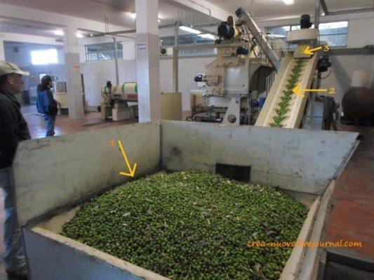 Как собирают оливки и отжимают оливковое масло в Сицилии