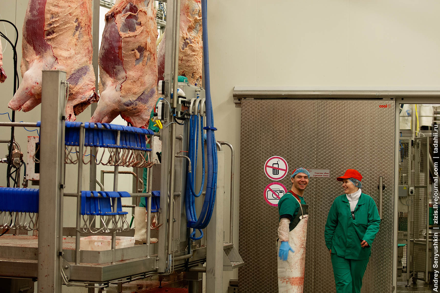 Как бычки превращаются в мясо