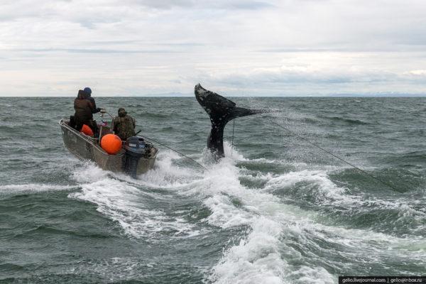 Как охотятся на кита на Чукотке