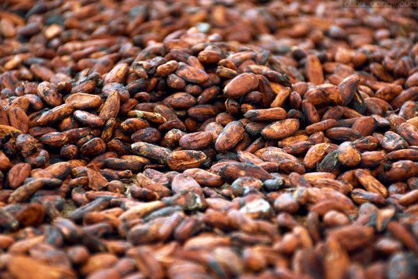 Как выращивают органическое какао в Бразилии