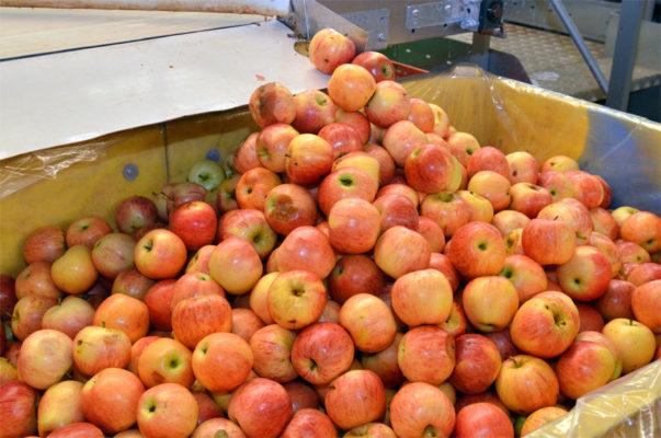 Как работает израильский завод по сортировке фруктов