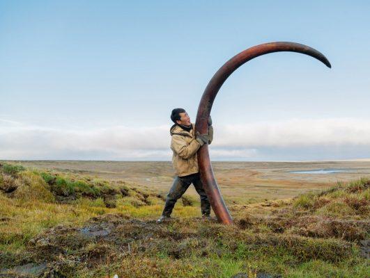 Добыча бивня мамонта в Сибири
