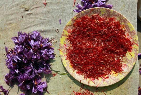 Как выращивают и собирают шафран