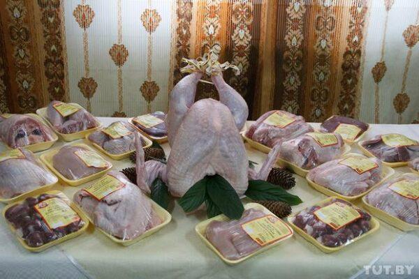 Как выращивают индеек в Беларуси