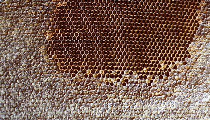Как в горах Осетии добывают мед