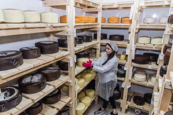 Как делают сыр в Пятигорске