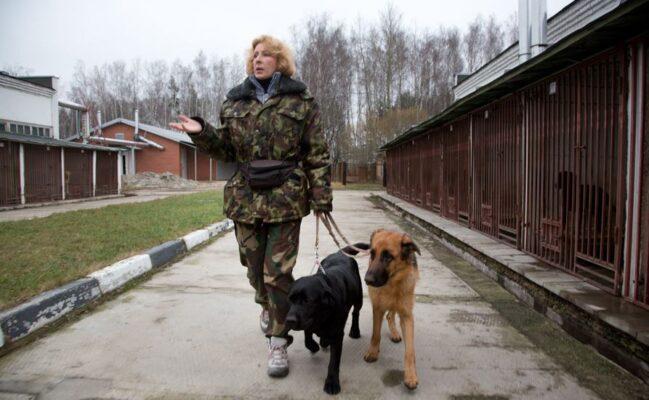 Как в России готовят собак-проводников