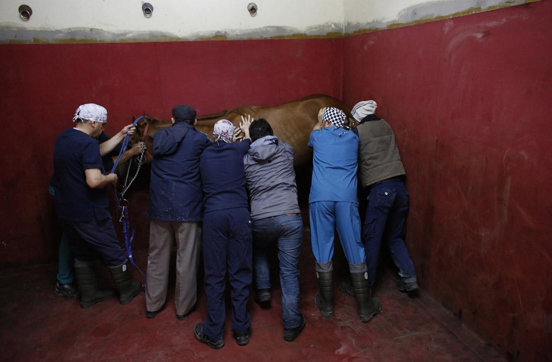 Как лечат лошадей в Турции